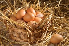 Free Basket Of Eggs Stock Image - 9513051