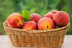 Free Basket Of Fresh Peaches Stock Photography - 97581762
