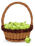 Basket Of Green Apples Stock Photos