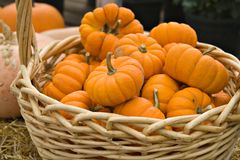 Free Basket Of Pumpkins Royalty Free Stock Photography - 3289417