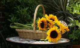 Basket Of Sunflowers Stock Images
