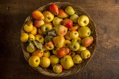 Basket with apples. Basket with old yellow apples cultivars royalty free stock photo