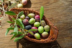 Basket with olive branch Royalty Free Stock Photo