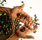Basket of olives Stock Image