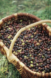Basket of olives Royalty Free Stock Images