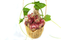 Basket of Onion. Onion in the basket isolated on white background Stock Photos