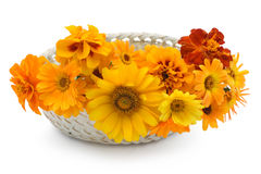 Basket with orange flowers Royalty Free Stock Image