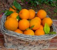 Basket of oranges . Stock Photos