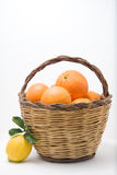 Basket of oranges and one lemons Stock Photos