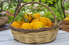 Basket with oranges on a table vitamins. Basket with oranges vitamins crop Stock Image