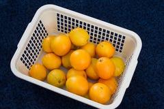 Basket with oranges Stock Photo