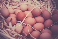 Basket of organic eggs in a rural farmers market Royalty Free Stock Image