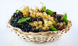 Basket of organic garden berries Stock Photo