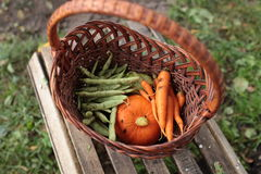 Basket of organic garden vegetables Royalty Free Stock Photo
