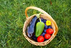 Basket with organic vegetables and fruits Stock Images