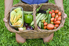 Basket of organic vegetables Stock Photos