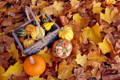 Basket of ornamental gourds with pumpkin and two squashes Stock Photography