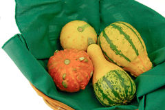 Basket of ornamental squash. Basket of colorful squash, or gourds, grown mainly for decorative use Royalty Free Stock Images