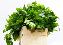 Basket with parsley Stock Photography