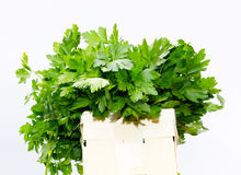 Basket with parsley Stock Images