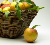 Basket of peaches Royalty Free Stock Photos