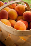 Basket of peaches. Fresh peaches covered  with morning dew in a basket Royalty Free Stock Photos