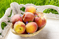 Basket of peaches on wooden tray Stock Photography