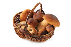 Basket with penny bun mushroom on white isolated background Royalty Free Stock Image