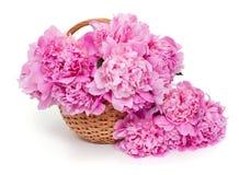Basket of peonies isolated on white background Royalty Free Stock Photo