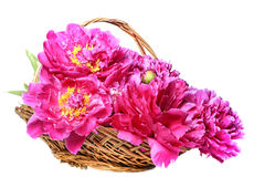 A basket with peony Stock Images