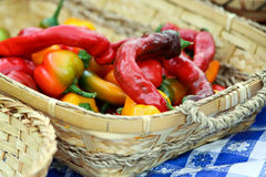 Basket of Peppers Stock Image