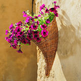 Basket of Petunias Stock Images