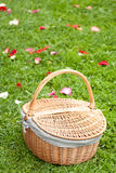 Basket for a picnic. Basket on the green grass with the rose petals Stock Photo