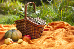 Basket for picnic, big pumpkin, apples and pears Stock Photos