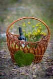 Basket of picnic Stock Images