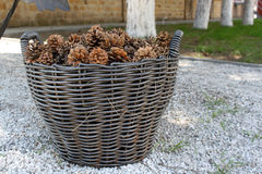 basket with pine cones Royalty Free Stock Photo