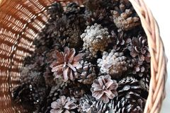 Basket of pine cones. Full of cones royalty free stock images