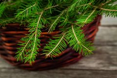 Basket with pine tree branch Stock Photography
