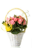 Basket with pink Royalty Free Stock Image