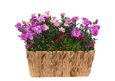 Basket with pink carnations or sweet williams and twinspur flowers. Basket with pink carnations or also known as sweet williams and twinspur flowers with many Stock Photos