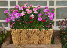 Basket with pink carnations or sweet williams and twinspur flowers. Basket with pink carnations or sweet williams and twinspur flowers in front of an old window Stock Images