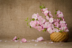 Basket with pink flowers Royalty Free Stock Photos