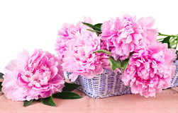 Basket of pink peonies Royalty Free Stock Image