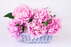 Basket of pink peonies Royalty Free Stock Photography