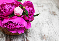 Basket with pink peony Stock Photo