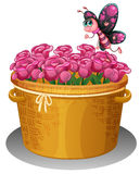 A basket of pink roses with a butterfly Royalty Free Stock Photography