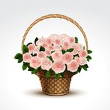 Basket of Pink Roses Isolated Stock Photography