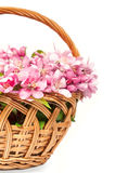 Basket with pink spring flowers Stock Image