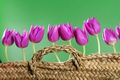 Basket pink tulips flowers in a row group line Stock Photo