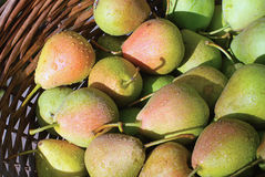 Basket with plenty of pear Royalty Free Stock Photos
